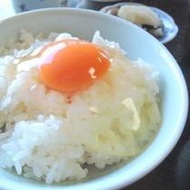 【土佐ジローの卵かけご飯】