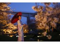 4月の夜桜