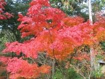 小岱山の紅葉