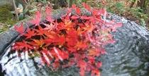 小岱山の紅葉 水盤