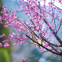 ■四季■春の湯平