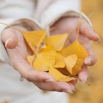 ■四季■いちょうの葉