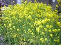 黄色のお花