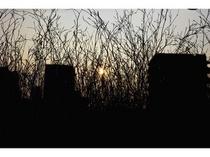 京の街に沈む夕陽/プレミアム