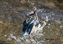 湖北の野鳥撮影1