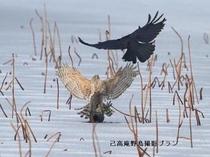 湖北の野鳥撮影9