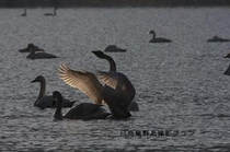 湖北の野鳥撮影4