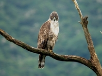湖北の野鳥撮影2