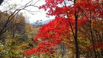 紅葉に囲まれた道路は落葉の絨毯です