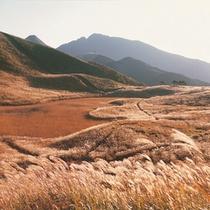 曽爾高原の四季