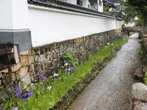 寺町通りの花しょうぶ