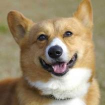 *【ペット(イメージ)】温泉以外は、ワンちゃんの出入りが自由なので、愛犬とずっと一緒☆
