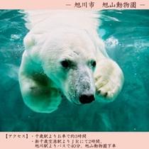 【観光】 旭山動物園
