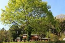 森の家遠望