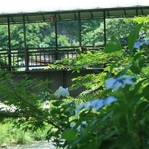 山菜亭へ渡る橋