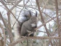 木の上で一休み