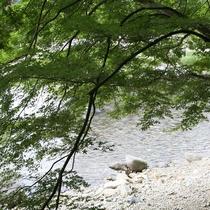 箒川の流れ