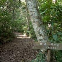 岬の遊歩道