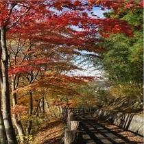 紅葉時の遊歩道