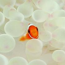 *【ダイビングイメージ】海の中にはこんなに可愛いお魚も♪