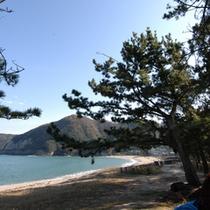 佐津海岸の西側には「 松林 」も。 朝、夕の散策にもおすすめです