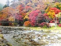 塩原の絶景!色とりどりの箒側の紅葉がとても綺麗です