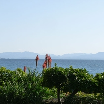 【玄関から景色】手前はアロエの花、奥は穏やかな有明海