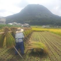 【掛け干し米】昔ながらの手作業で仕上げたお米です