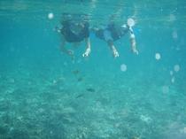 竹富島の海でシュノーケリング