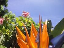 小浜荘のお庭