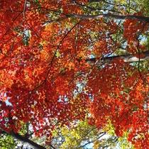 *【周辺スポット】高水山の紅葉。色鮮やかに染まった木々が織りなす自然美は見ものです。