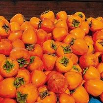 *【果物】「ころ柿」と呼ばれる干し柿。甲州市は果物の宝庫です!