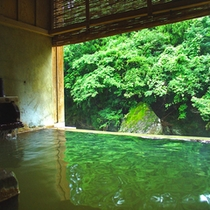 新緑が美しく湯に映える/テイの湯