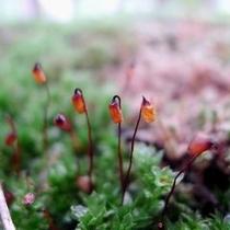 【夏】雪解けの季節に咲いた草花が役目を終え、また次の春を待ちます。