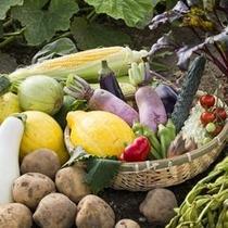 【大西さんの野菜】良質な土壌は活発な噴火活動のたまもの。気候に恵まれた洞爺では元気な野菜が育ちます。