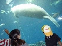 鳥羽水族館・ジュゴン〜子供の頃からいる水族館の代名詞です