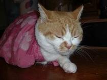 当宿の女将猫らんちゃん(猫の苦手な方は予約を入れないようお願いします。)