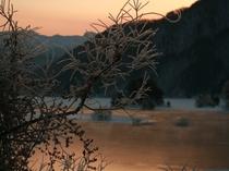 霧氷秋元湖周辺うめもどき