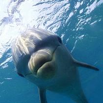 可愛さ100倍!!間近で泳ぐ親子の野生イルカに会いに行こう