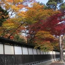 新潟市秋葉区の中野邸美術館のもみじ園です