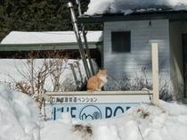 大雪は看板もすっぽり。そしてクリちゃん