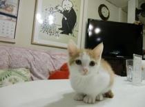 赤ちゃん猫のチビ太君。