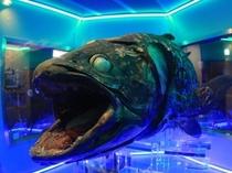 沼津港深海水族館