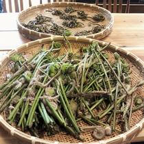 *【食材】地元の山菜などを使った料理をご用意いたします。