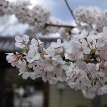 京の春景色