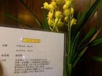 「ミラクル マオ」生産者が浅田真央ちゃんの世界一を祈願して新種改良に取り組んで完成した品