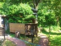2013年7月撮影。初夏の朝の庭。