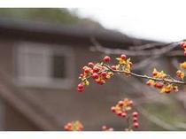 10月。庭の木の実。自然を感じて…