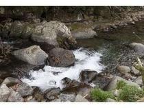 裏の渓流。川遊びや釣りもお楽しみいただけます
