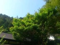7月!庭から撮影した初夏の空。